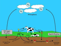 the nitrogen cycle powerpoint student note sheet and quiz by