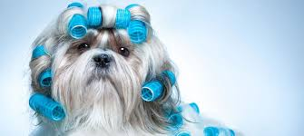 pet grooming for dogs cats small animals in reading ma