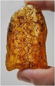 petites mouches cuisine le piège de l ambre et le vol des insectes