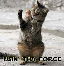 Star Wars Cat Meme - using the force star wars catsstar wars cats