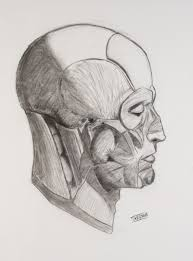 face drawing side view by deadbraintissue on deviantart