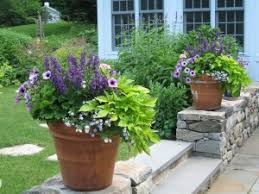 Plant Combination Ideas For Container Gardens Combos For Purples And Lime Green To Coordinate If We Keep