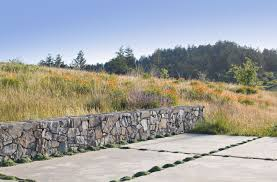 native plants northern california stone wall concrete patio with creeping thyme in joints set into