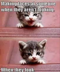 Cute Kitten Memes - cute kitten pretending to be cute cat memes pinterest cat