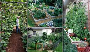 22 ways for growing a successful vegetable garden amazing diy