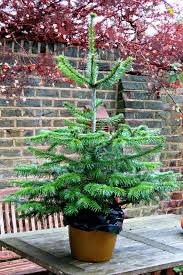 just saying christmas trees plastic or real cut or