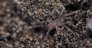 200 baby tarantulas make creepy crawly debut mnn mother nature