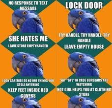 paranoid parrot by ben meme center