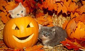 halloween kitties background cat wallpapers page 11 pet animal feline cat kitten cute mammal