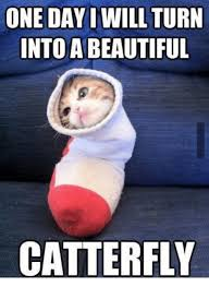 Turn Photo Into Meme - one day i will turn into a beautiful catterfly beautiful meme on