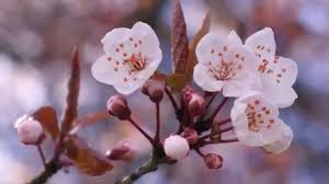 Pictures Of Beautiful Flowers In The World - top 15 most beautiful flowers in the world youtube