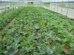 ut market garden project u2013 notes and observations from the
