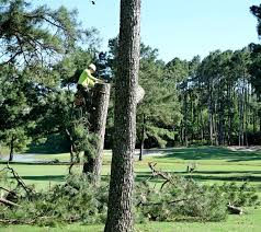 houston tx tree service affordable tree service in houston