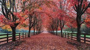 pathway with leaves fallen from trees enclosed with fence hd