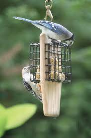 suet birds are loving it birds choice