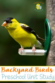68 best for the birds images on pinterest nature study bird