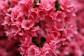 heart spring flowers natural flowers free nature pictures by