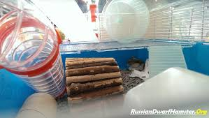 How Much Is A Hamster Cage Buying A Dwarf Hamster Cage How To Save Money U0026 Time