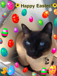 happy easter dear happy easter evfurryone and happy 2nd birthday april and blue