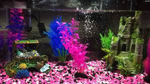 how to plan an aquarium 11 steps with pictures wikihow