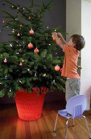 live christmas trees for eco friendly holiday decor green