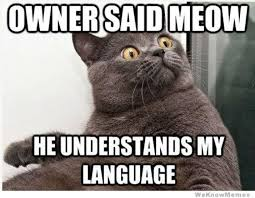 Morpheus Cat Meme - 20 best meow images on pinterest cute kittens baby kittens and cats