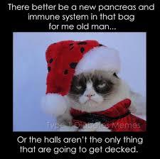 Diabetes Cat Meme - inspirational 475 best cat memes images on pinterest wallpaper