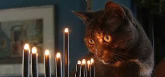 cat menorah a cat s lament at christmas catster