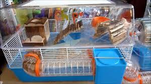 Hamster Cages Petsmart Hamster At Petsmart