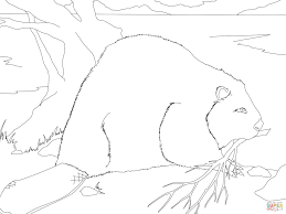 beaver building a dam coloring page free printable coloring pages