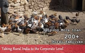Backyard Poultry In India About Mysuru Naati Chicken