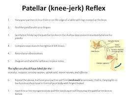 Relex Arc The Reflex Arc Nerve Impulses Follow Routes Through The Nervous