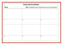 the life cycle of a sunflower by misselven teaching resources tes