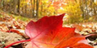 imagenes de otoño para fondo de escritorio 25 fondos de escritorio pintados de gran belleza