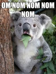 Nom Nom Nom Meme - om nom nom nom nom koala bear quickmeme
