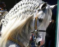 Horse Bridle Decorations Braiding The Mane Use To Be Restricted To English Horse Shows