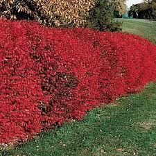 best 25 burning bush ideas on burning bush