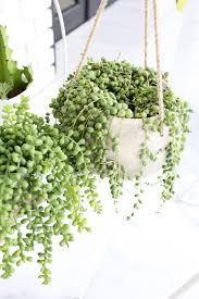 Best Houseplants Bathroom Design Magnificent House Plants Suitable For Bathrooms