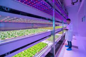 philips led grow light led horticultural lighting philips growwise center and purdue