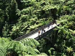 206 tours reviews bridge to nowhere tours manawatu wanganui nz 206 travel