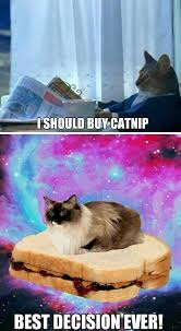Sophisticated Cat Meme Generator - image 614480 i should buy a boat cat know your meme