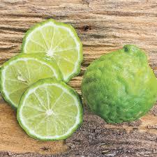 kieffer lime tree from wayside gardens