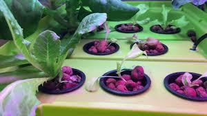 broccoli it u0027s man made hydroponic indoor garden youtube