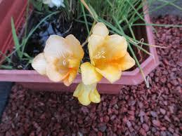 north yorkshires craft guru my pretty garden flowers
