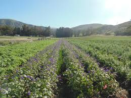 volunteer at the native seed farm irvine ranch natural landmarks