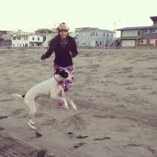 australian shepherd ultra marathon train your dog for long distance trail running in 20 steps