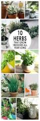 Herb Garden Winter - can you grow an herb garden indoors growing herb garden indoors