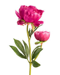 peonies flower peony silk flower stems for casual decorating at silkflower