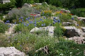 Alpine Rock Garden by Onions For Crying Out Loud