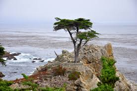 Discover The North Coast Visit California Family Road Trip Along The Pacific Coast Highway No Back Home